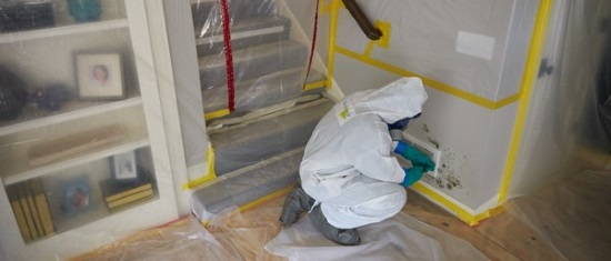 Residential Mold Services - Mold Inspections